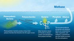 Methane in the Ocean