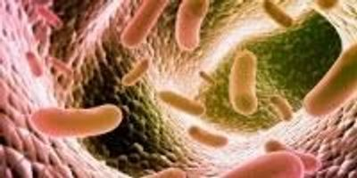 Microbes in Your Gut Influence Major Eye Disease