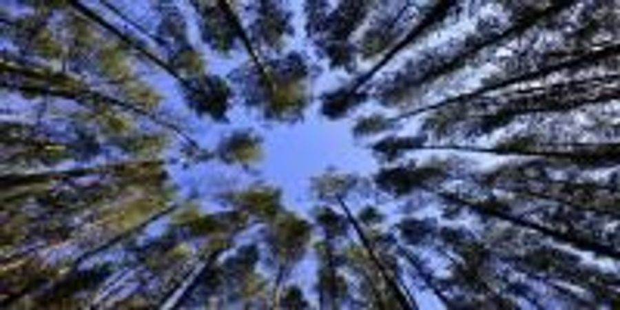Carbon-Hungry Plants Impede Growth Rate of Atmospheric CO2