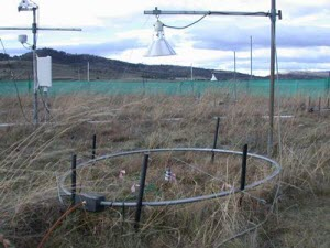 Indirect effects of rising CO2 levels on ecosystems more important than previously thought