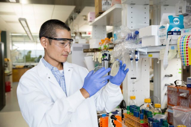 Great Lakes Bioenergy Research Center researcher Trey Sato monitors yeast cultures in the lab