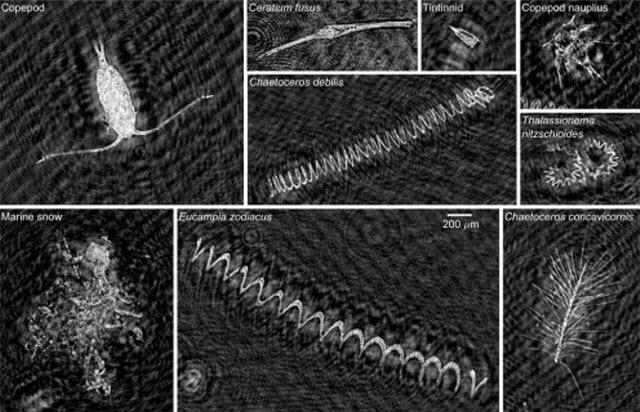Holographic Microscope