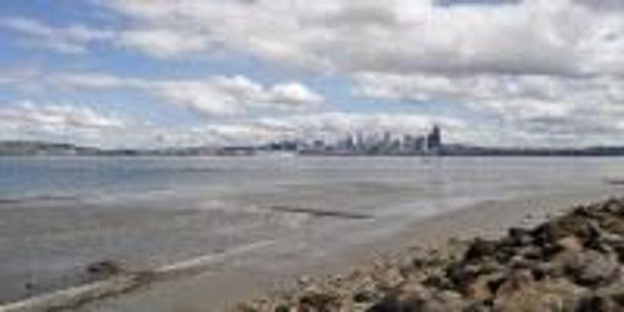 Floating DNA Reveals Urban Shorelines Support More Animal Life