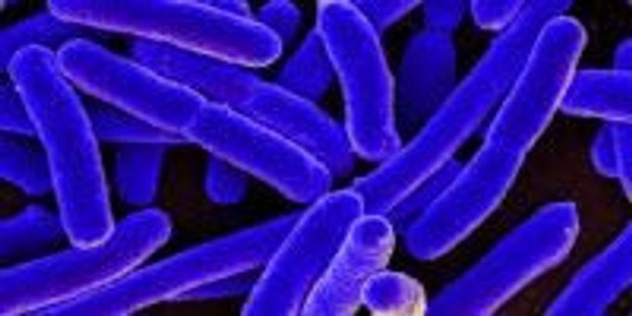 Revving the Microbial Engine: Horsepower versus Fuel Efficiency in Bacterial Genomes