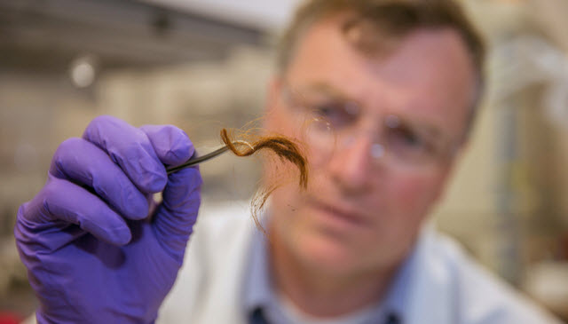 Team Develops Forensic Method To Identify People Using Human Hair Proteins Lab Manager