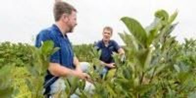 UW Spinoff Helps Boost New Crop in Cranberry Country