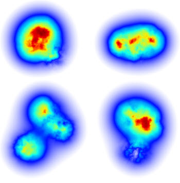 gluon density