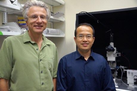 Craig Montell and Yali Zhang