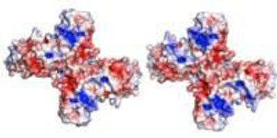 Researchers 'Solve' Key Zika Virus Protein Structure