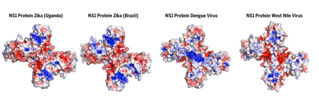 molecular structure of a protein produced by the Zika virus