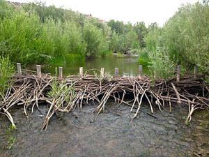 beaver dam analogs