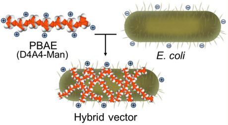 E.coli transport vessel diagram