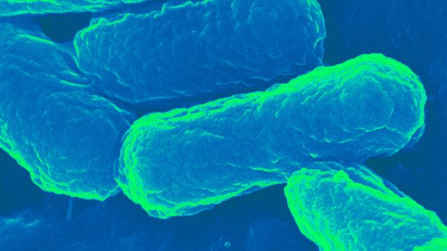 E. coli-based transport capsule