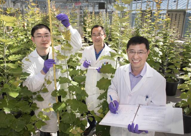 Yuanheng Cai, Xuebin Zhang, and Chang-Jun Liu