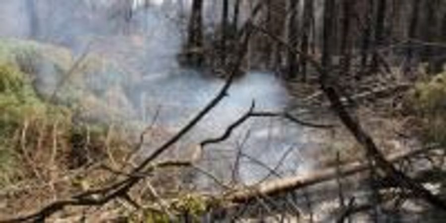 Climate Change Is Turning the World's Bogs into Fire Hazards, Researchers Warn