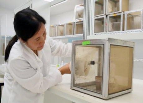 UTMB research associate Ruimei Yun