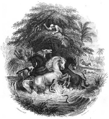 Historic illustration of electric eels attacking horses
