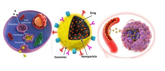 Exosome-Biomimetic Nanoparticles to Act as Drug Carriers