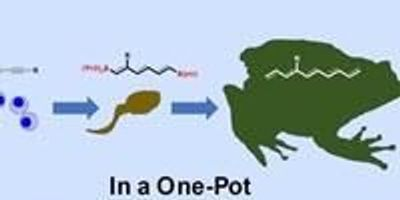 Researchers Develop Chemical Reaction Method for More Efficient Drug Production