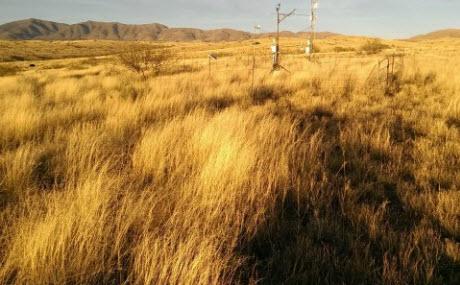 Kendall Grassland, Arizona