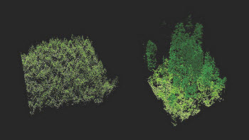 the differences in structure in plantation (left) and old-growth forests