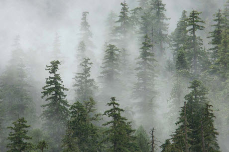 Old-growth forest in the Oregon Cascades