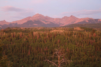 Dead trees in the San Juan National Forest