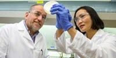 Researchers Grow Citrus Disease Bacteria in the Lab